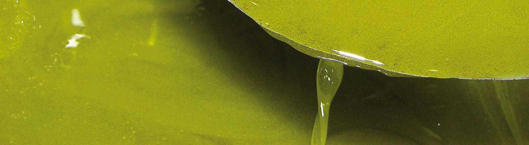 Olio - Masseria Alti Pareti